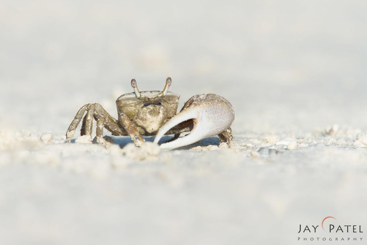 St. Anne's Beach, Florida (FL), USA