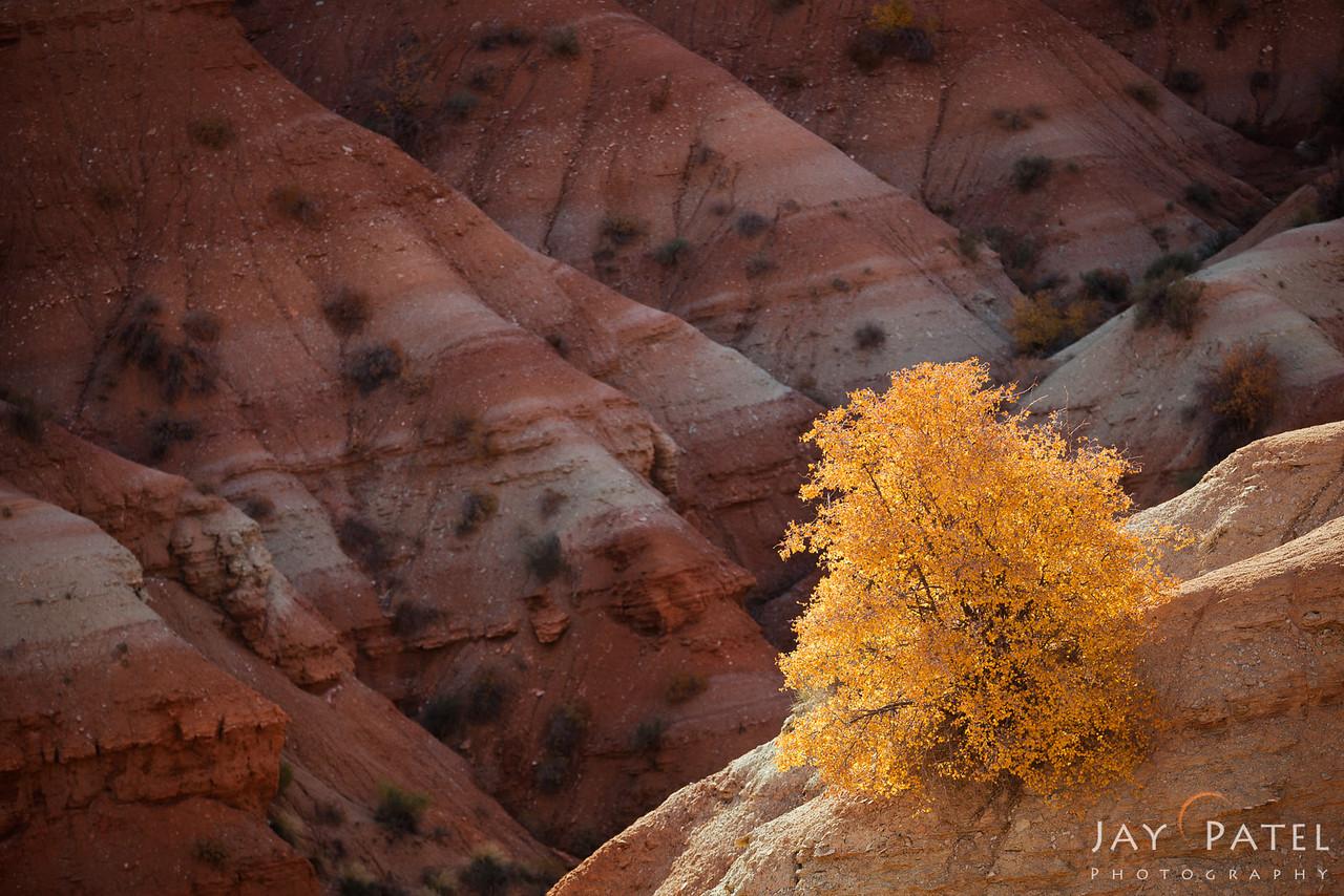 Paria Townsite, Grand Staircase-Escalante, Utah (UT), USA