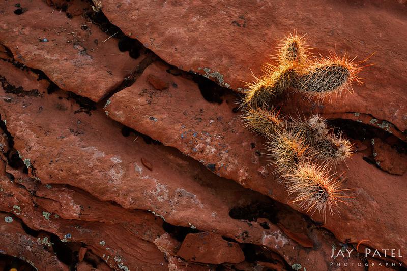 Glen Canyon Recreational Area, Arizona (AZ), USA