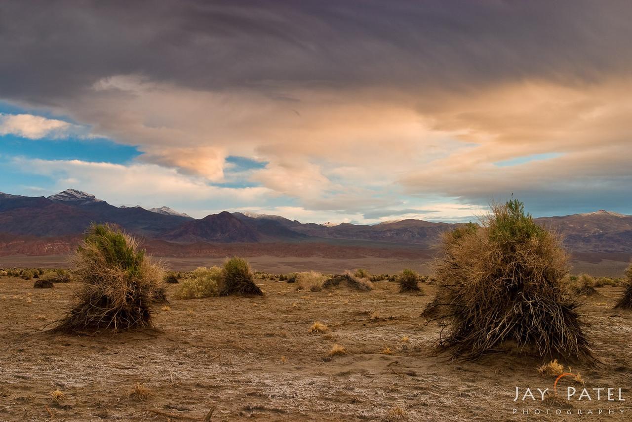 Devils Cornfield, Death Valley National Park, California (CA), USA