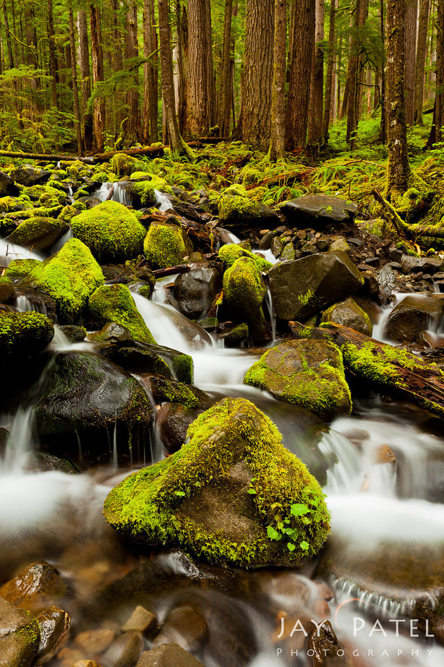 Sol Duc, Olympic National Park, Washington (WA), USA