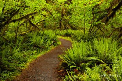 Olympic National Park, Washington (WA), USA