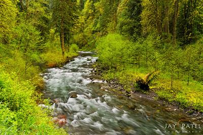 Eagle Creek, Columbia River Gorge, Oregon (OR), USA