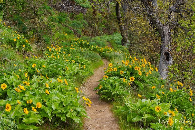 Tom McCall Nature Preserve, Oregon (OR), USA