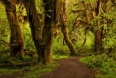 Potrait of a Rainforest