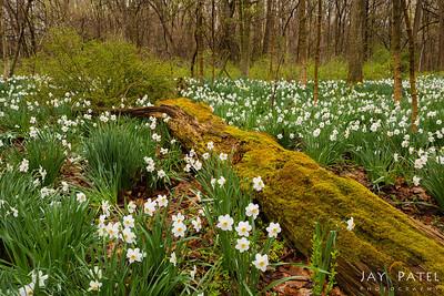 Cuyahoga Valley National Park, Ohio (OH), USA