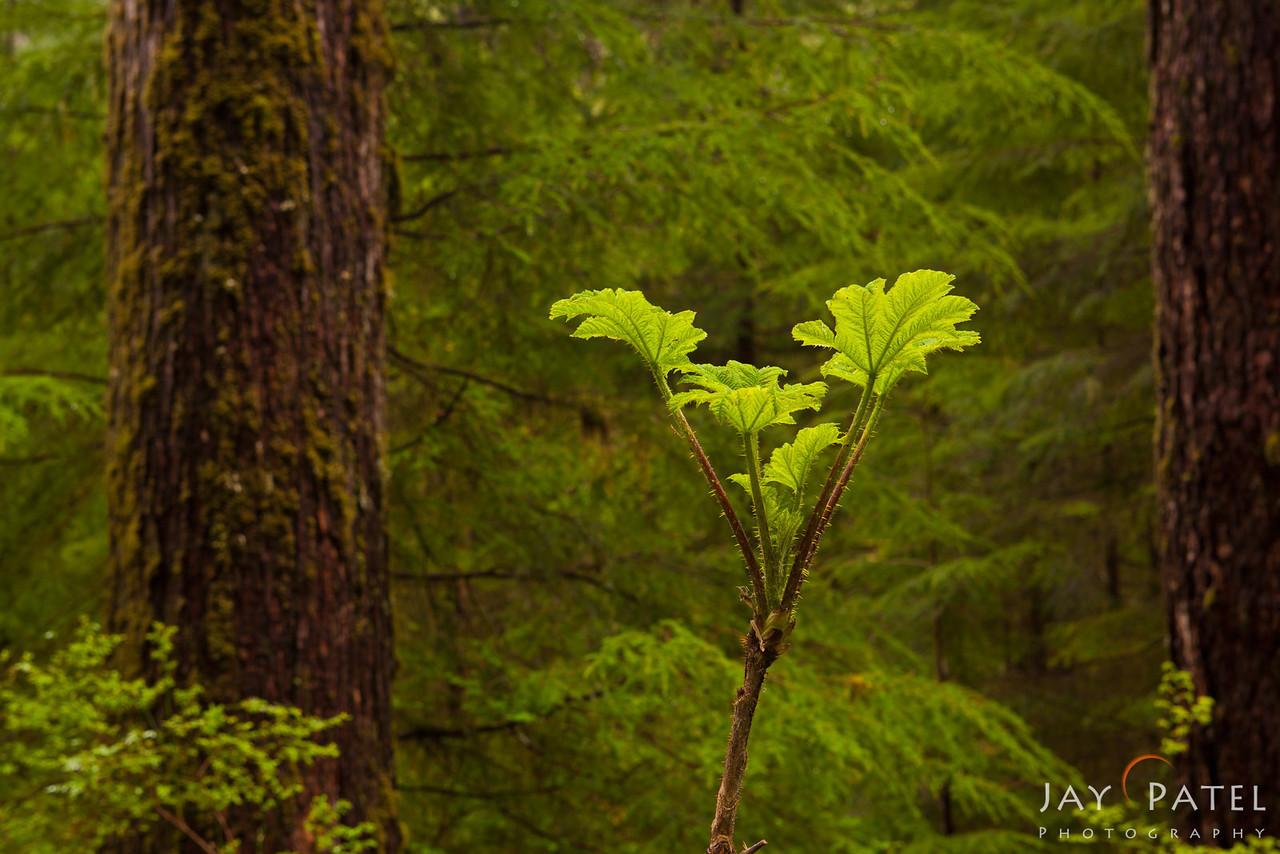 Sol Duc, Olympic National Park, Washington (WA), USA