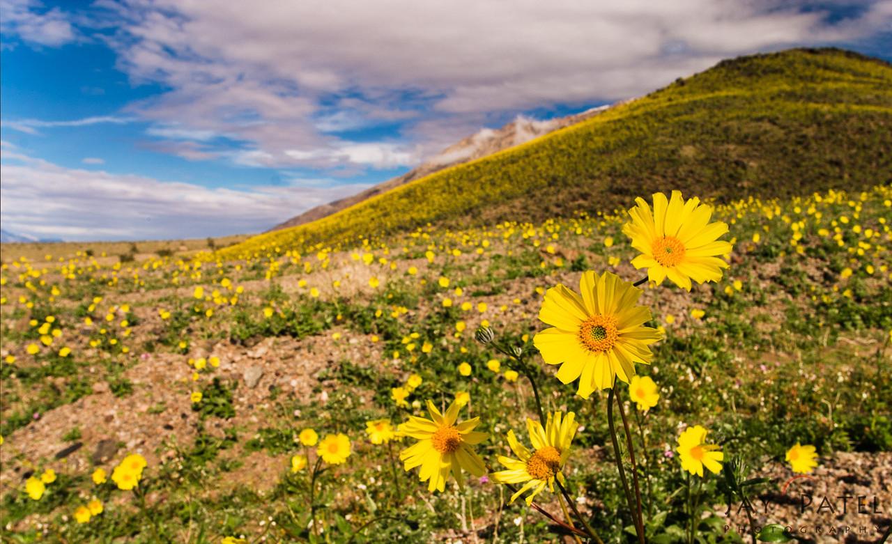 Death Valley National Park, California (CA), USA