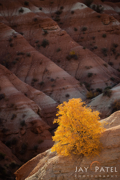 Paria Townsite, Grand Staircase-Escalante, Utah (UT), USA