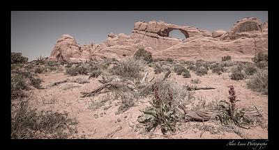 """""""Desert Skyline"""""""