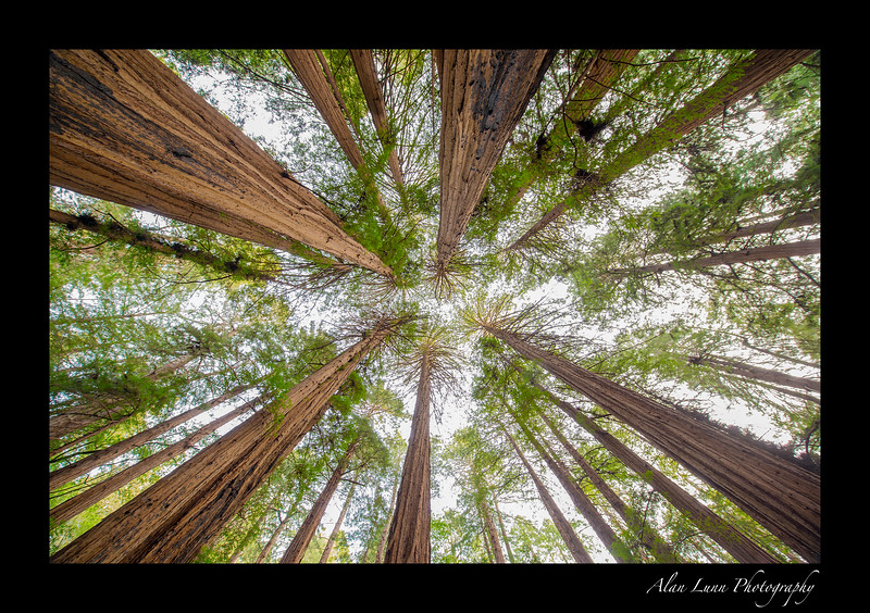 """Redwood Spires"""