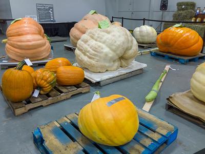 Giant Harvest