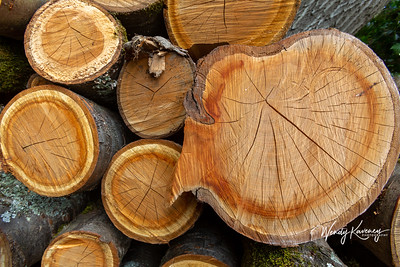 Europe, France, Giverny.  Cut logs.