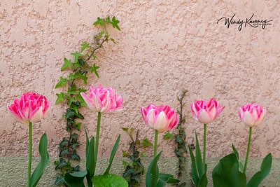 Five pink tulips and vine.