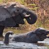 Elephants, Mudumu National Park.