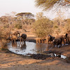 Along the Elephant Highway