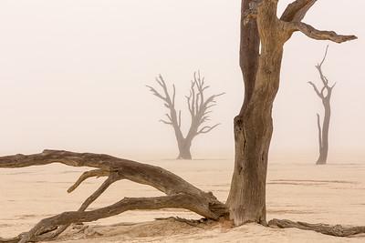 Ghost Trees in Fog