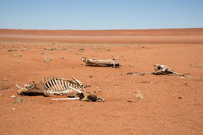 Drought Effects