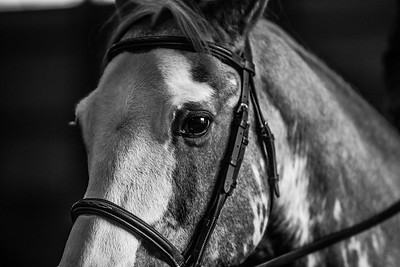 3-4-18_NGR_Endicott Horse Show-1