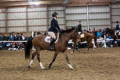 3-4-18_NGR_Endicott Horse Show-38