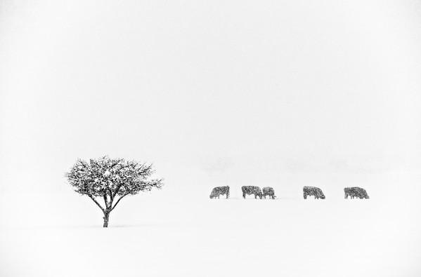 Sanpete Winter