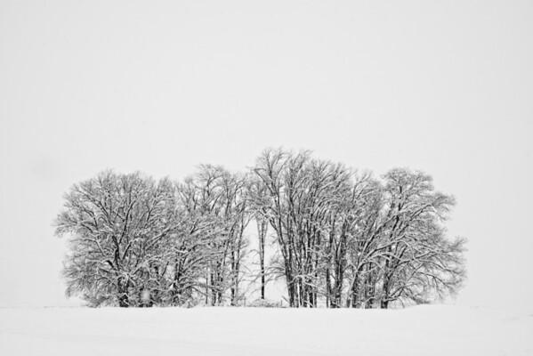 Family of Trees