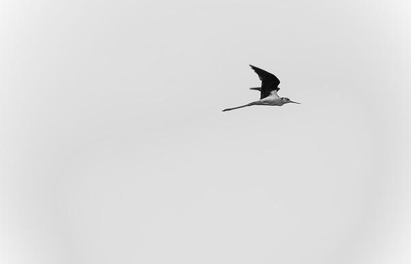 Black- Widget stilt
