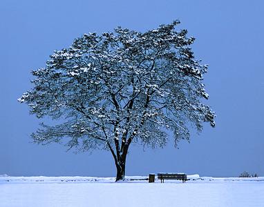 #nature #stylized