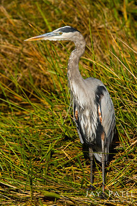 Anhinga Trail, Everglades National Park, Florida (FL), USA