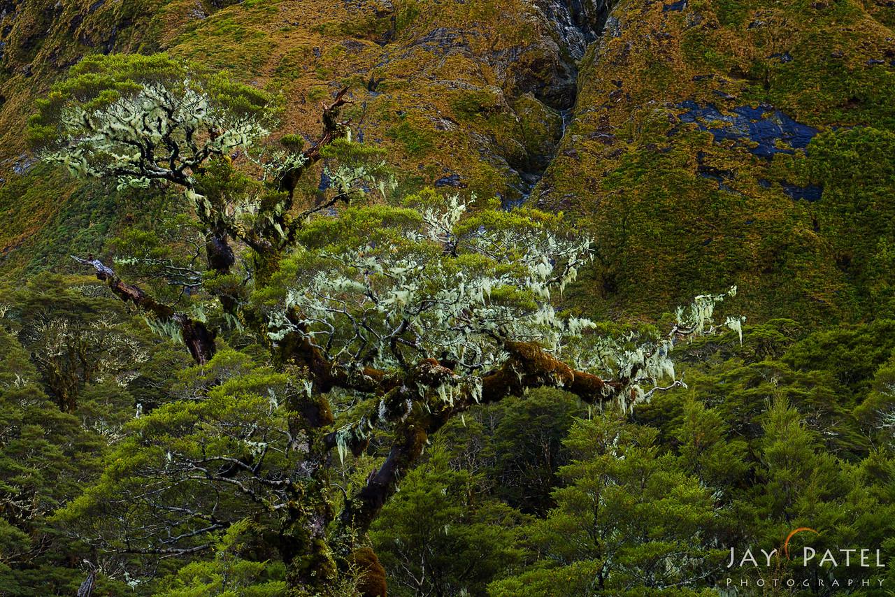 Fiordlands National Park, New Zealand