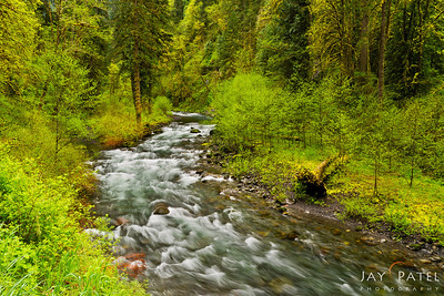Eagle Creek, Columbia River Gorge, Oregon (OR), USA