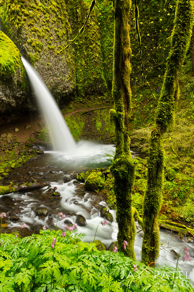 Pony Tail Falls, Columbia River Gorge, Oregon (OR), USA