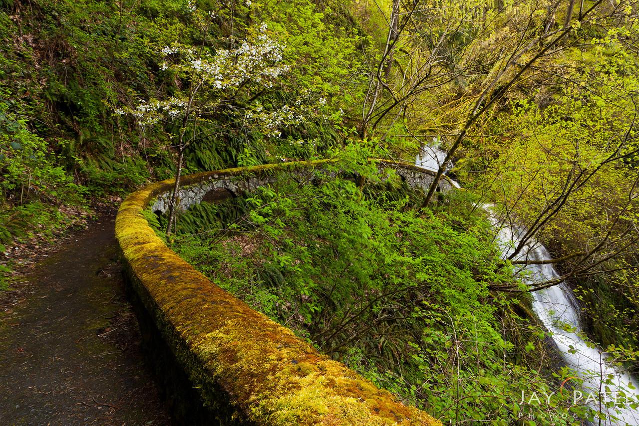 Shepard's Dell, Columbia River Gorge, Oregon (OR), USA