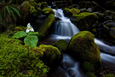 Between a Rock and a Trillium