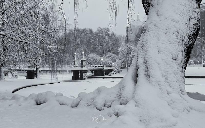 Boston Public Garden after the Snowstorm
