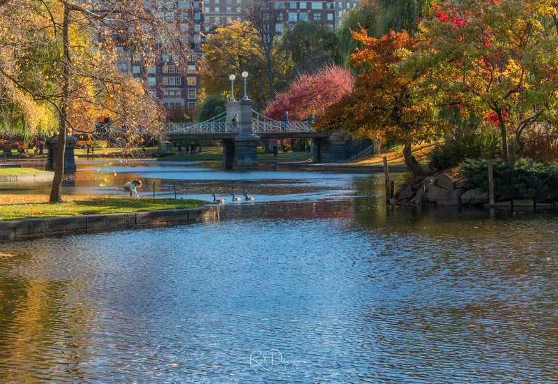 Boston Public Gardens I