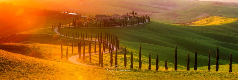Golden Tuscany II