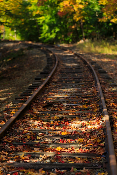 Leaves on the Tracks