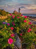 Beach Roses at Annisquam Light