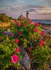 Beach Roses at Annisquam Light