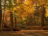 Fall in New England IX