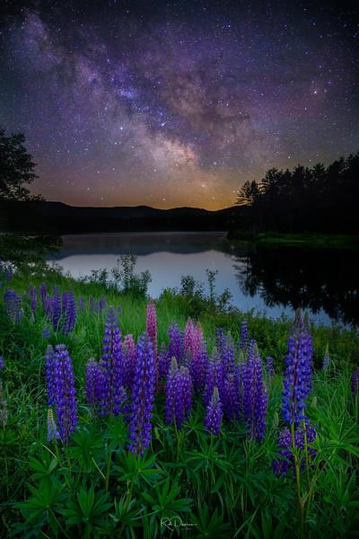 Milky way over lupines
