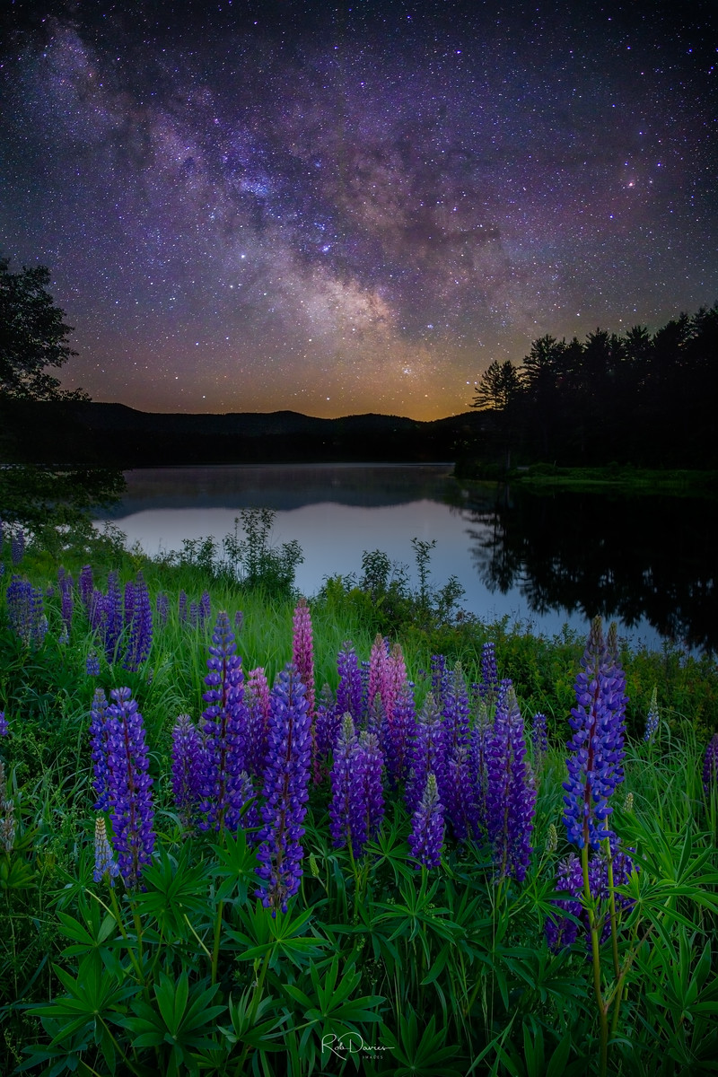 Milky Way over lupines in Maine