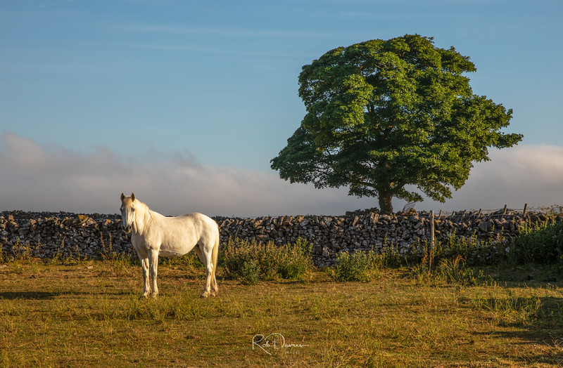 Horse in a field in the Peak District, England