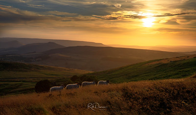 Sheep Train