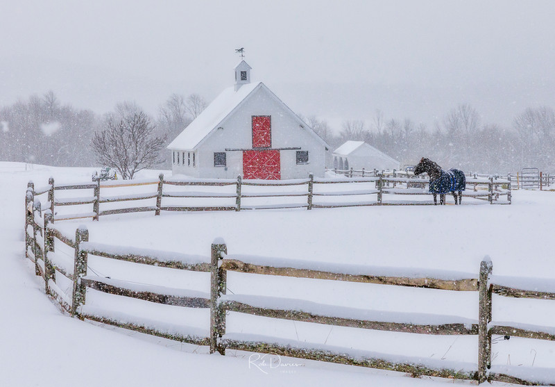New England Winter Landscapes - Horse and red barn, Vermont