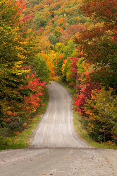 Colors of Vermont in the Fall I