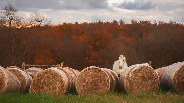 Amongst the bales, Holmes County