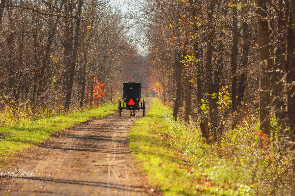 Buggy in the woods, Holmes County
