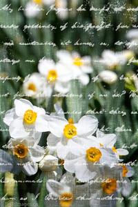 Spring Breath